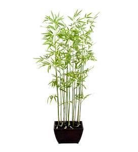 Bilde av Bambus (160 cm)
