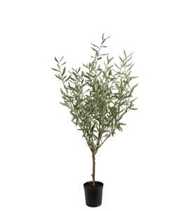 Bilde av Oliven tre 130 cm