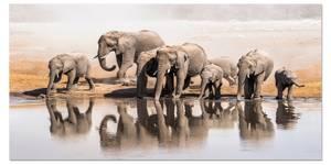 Bilde av Savannah Habitat (120x60 bilde Plexiglass)