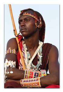 Bilde av African Warrior (80x120 bilde Plexiglass)