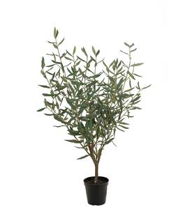 Bilde av Oliven tre 100 cm