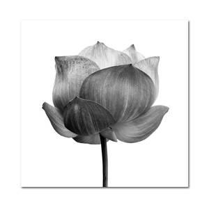 Bilde av Flora (120x120 bilde Plexiglass)