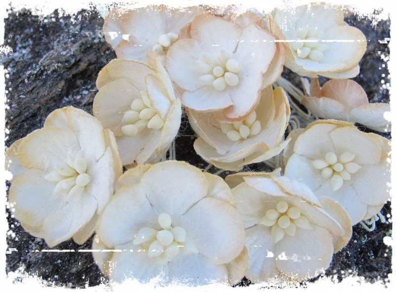 Bilde av Kirsebærblomst, beige (6)