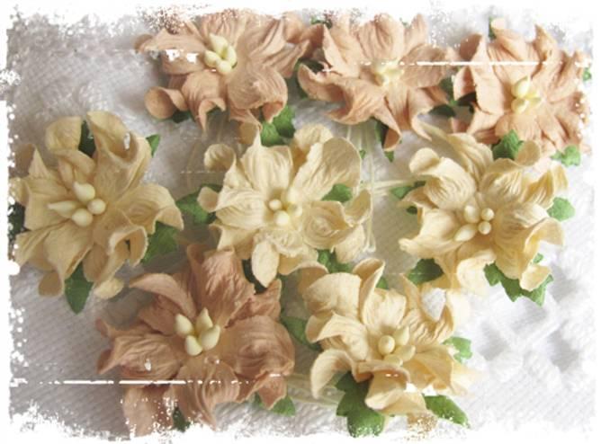 Bilde av Små gardenia, beige (6)