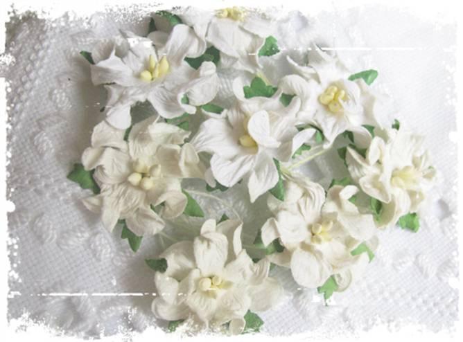 Bilde av Små gardenia, hvit (6)