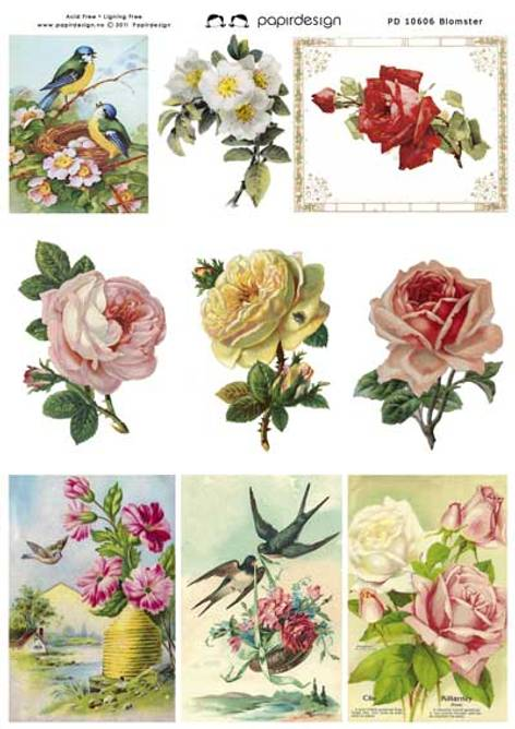 Bilde av Klippeark blomster (25)