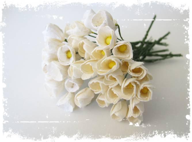 Bilde av Tulipaner