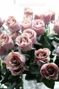 Bilde av Stilkrose 47cm, lys rosa
