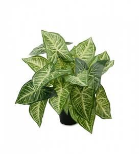 Bilde av Syngonium podophyllum H25cm