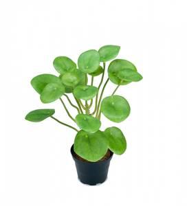 Bilde av Elefantøre H25cm små blad