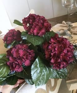 Bilde av Hortensia vinrød