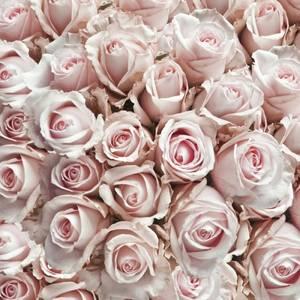 Bilde av Kaffeserviett med roser