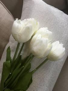 Bilde av Tulipan, hvit