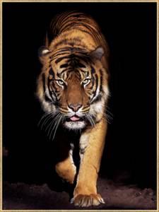Bilde av Bildeprint tiger, gullramme