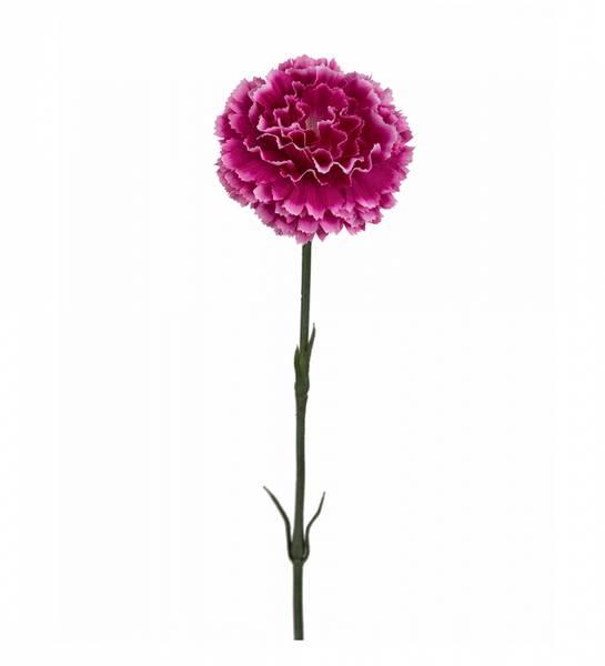 Nellik 50cm Mørk rosa
