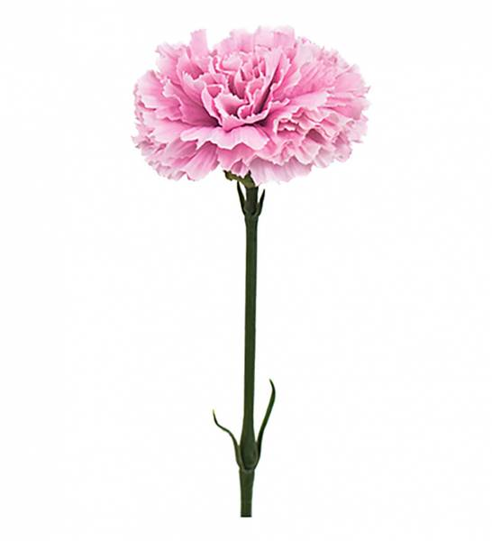 Nellik 40cm rosa