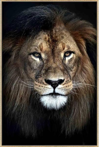 Bildeprint  Løve