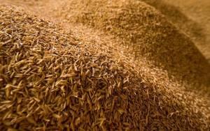 Bilde av Rice Hulls, Ris skall