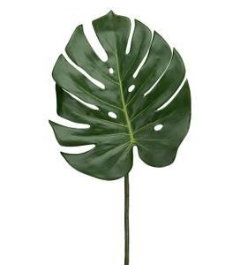 Bilde av Mr. Plant - Monstera blad
