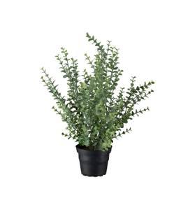 Bilde av Mr. Plant - Eucalyptus 40cm
