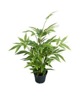 Bilde av Mr. Plant - Bambus 45 cm