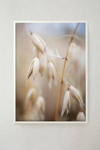 Bilde av Storefactory - Oat in the open 50x70cm