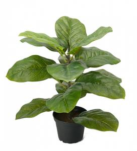 Bilde av Mr. Plant Fiolfokus 40 cm