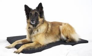Bilde av Hundemadrass XL, (90 x 60)