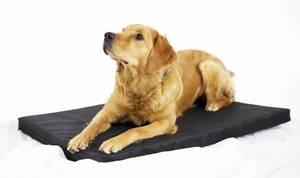 Bilde av Hundemadrass, MEDIUM, (71x42)