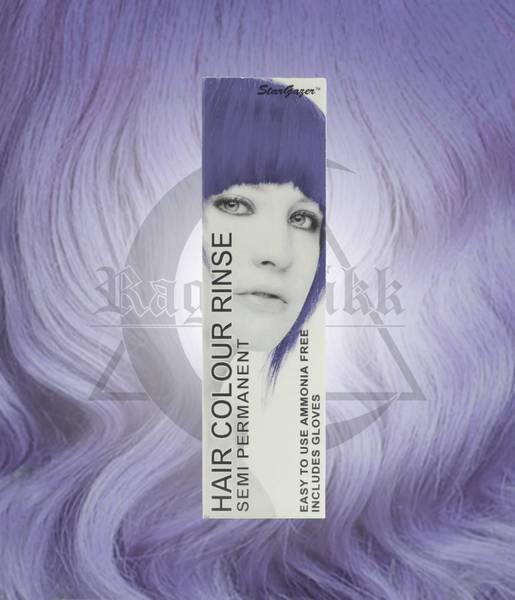 Bilde av Stargazer Lavender