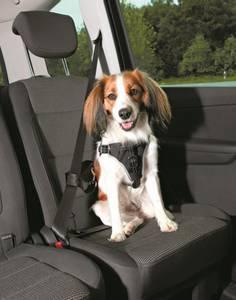 Bilde av SIKKERHETSELE/SYKKELSELE DOG PROTECT 40-55CM 20MM