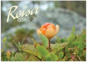 Bilde av Postkort Reisa molte