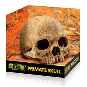 Bilde av Exo terra Primate skull L