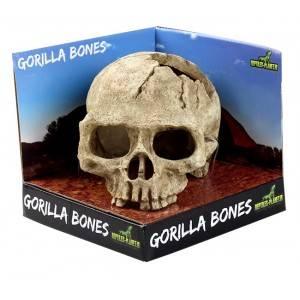 Bilde av Gorilla bones
