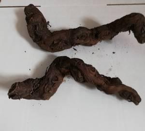 Bilde av Dragon Vine  20-40cm