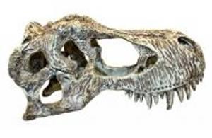 Bilde av Komodo T-rex S