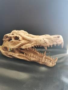 Bilde av Krokodille