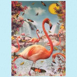 Bilde av Poster flamingo