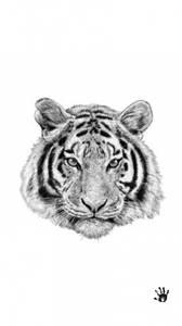 Bilde av Tiger poster