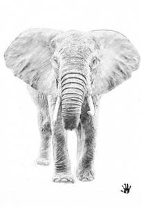 Bilde av Elephant poster