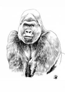 Bilde av Gorilla poster