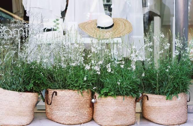 Bilde av Planter