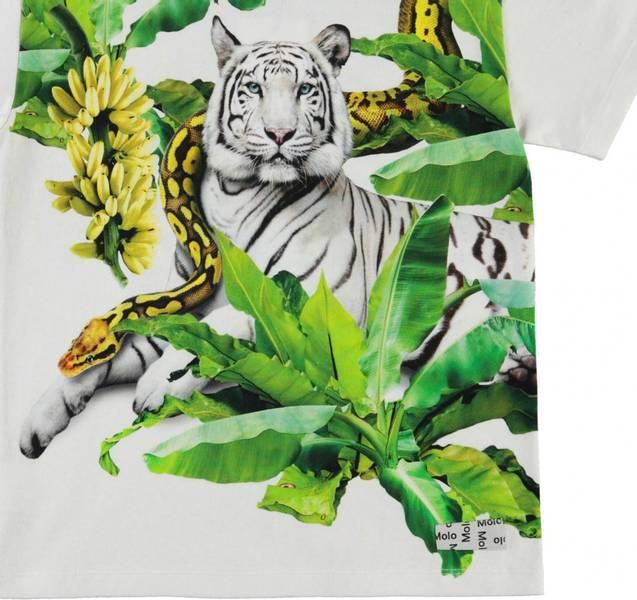 Molo, Raveno resting tiger