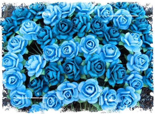 Bilde av Roser Petrol og lys blå