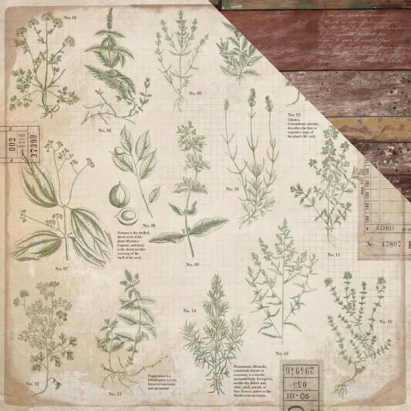 Bilde av Herbs