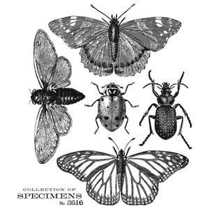 Bilde av Specimen