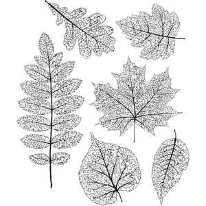 Bilde av Pressed foliage