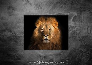Bilde av Afrikas 5 store - Løven
