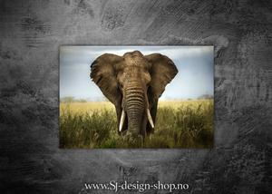 Bilde av Afrikas 5 store - Elefanten