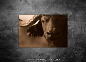 Bilde av Afrikas 5 store - Bøffelen